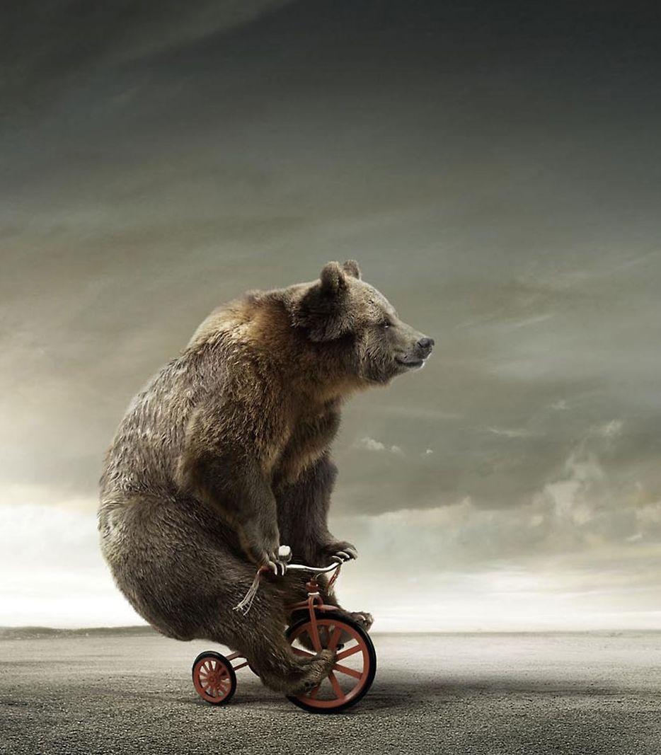 orso su bicicletta triciclo cult stories sport ciclismo