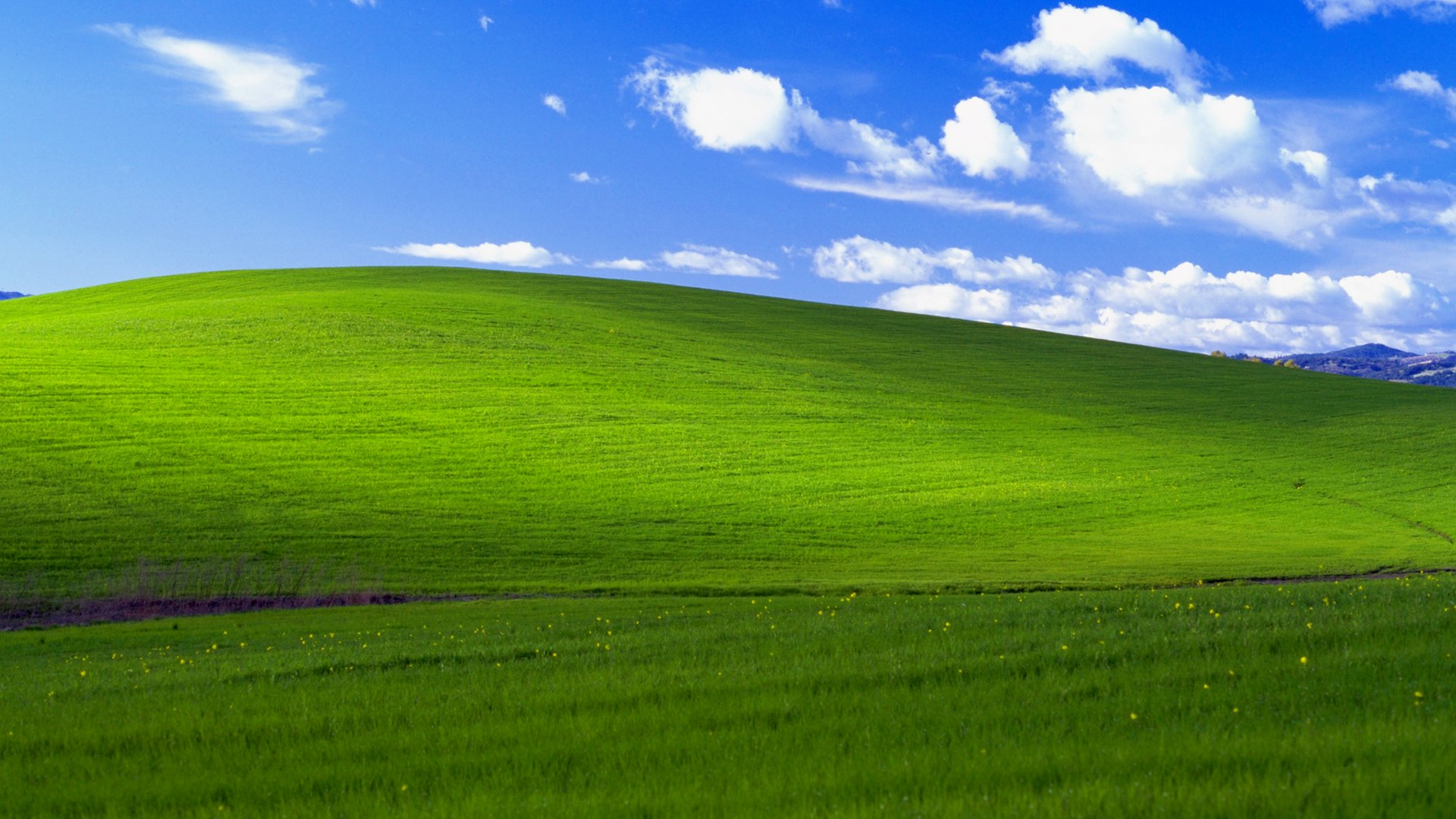 Charles O'Rear - WindowsXP Bliss Screen, Sonoma County (1996) cult desktop photo immagine famosa windows cultstories iconic nerd software bill gates cultgallery cult stories cultstories cinema cult story cultstory art culture music ipse dixit aneddoti citazioni frasi famose aforismi immagini foto personaggi cultura musica storie facts fatti celebrità vip cult spettacoli live performance concerto