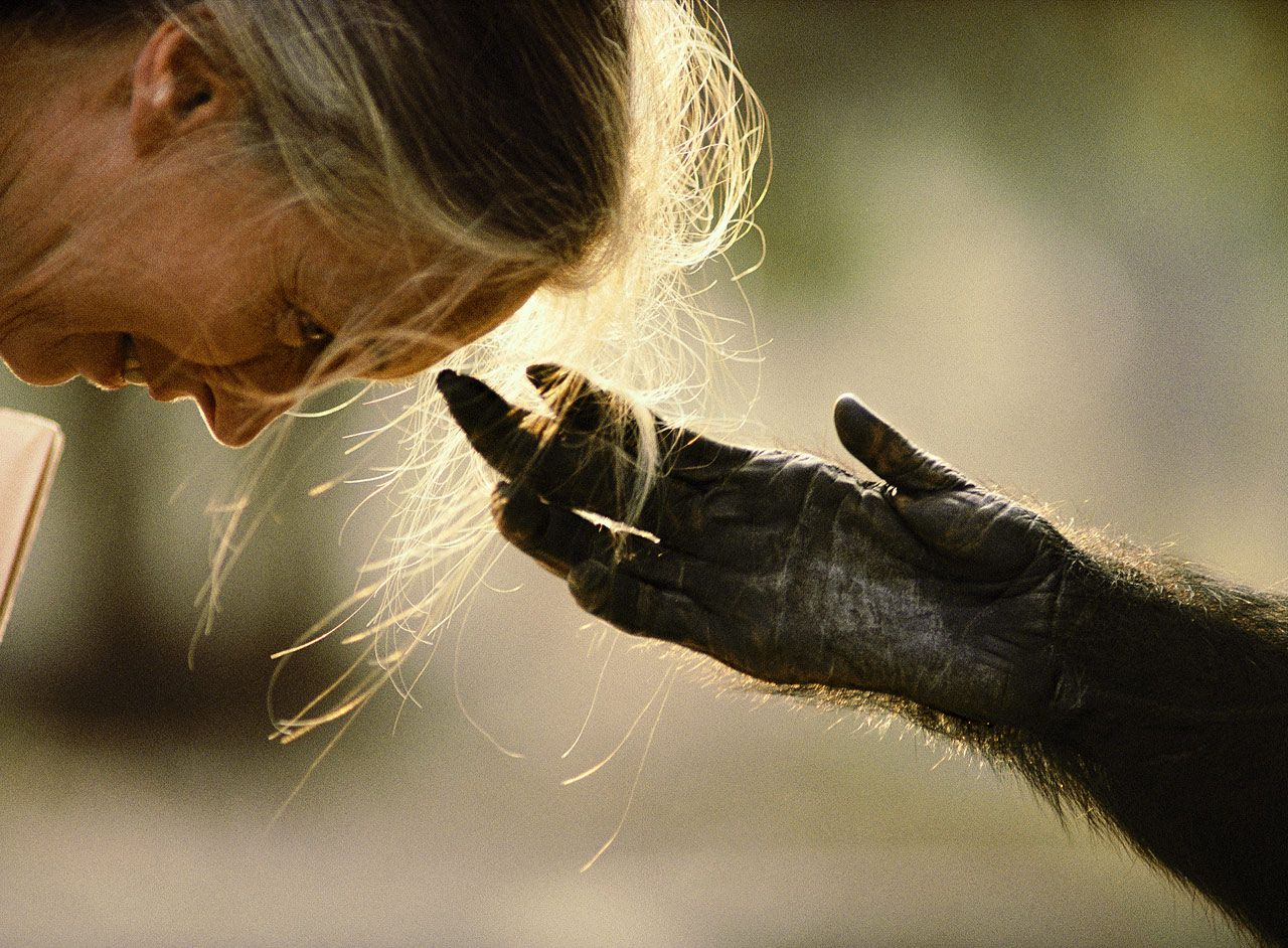 Michael Nichols - Jane Goodall e Jou Jou, - Brazzaville, Congo (1990) cult foto famose natura national geographic most famous nature photos cultstories uomo scimpanzè primati cult stories cultstories cinema cult story cultstory art culture music ipse dixit aneddoti citazioni frasi famose aforismi immagini foto personaggi cultura musica storie facts fatti celebrità vip cult jane goodall institute jane goodall libri jane goodall film jane goodall quotes jane goodall citazioni jane goodall foundation jane goodall ted jane goodall aforismi jane goodall simpson jane goodall biografia jane goodall frasi jane goodall wiki jane goodall video jane goodall age jane goodall accomplishments jane goodall and her chimps jane goodall alive jane goodall as a child jane goodall article jane goodall autobiography jane goodall address jane goodall appearances jane goodall activities a jane goodall quote wounda a jane goodall a video of jane goodall a biography of jane goodall a summary of jane goodall through a window jane goodall a reason for hope jane goodall jane goodall a barcelona jane goodall a vegetarian what a life jane goodall jane goodall à paris jane goodall retour à gombe jane goodall retour à gombe streaming a jane goodall abrazo a jane goodall entrevista a jane goodall jane goodall biography short jane goodall beauty and the beasts jane goodall books amazon jane goodall bbc jane goodall biography jane goodall books jane goodall bücher jane goodall belgium jane goodall barcelona jane goodall b jane goodall calgary jane goodall costume jane goodall child jane goodall college jane goodall contributions jane goodall challenges jane goodall children's book jane goodall contact jane goodall cambridge jane goodall career jane c goodall cambridge jane goodall death jane goodall documentary jane goodall discoveries jane goodall death date jane goodall died jane goodall date of birth jane goodall dead jane goodall dar constitution hall jane goodall degrees jane goodall dc libri di jane goodall frasi di jane goodall jane goodall education jane goodall early life jane goodall edmonton jane goodall email jane goodall events jane goodall elephants jane goodall every day edit jane goodall environmental middle school jane goodall experiments jane goodall encyclopedia chi è jane goodall jane goodall e scimpanzè jane goodall e wanda jane goodall amíg élek remélek jane goodall facebook jane goodall's favorite food jane goodall facts jane goodall family jane goodall frases jane goodall france jane goodall famous quote jane goodall f&m jane goodall f jane goodall gorilla jane goodall gombe jane goodall gmo foods jane goodall gary dell'abate jane goodall gorilla in the mist jane goodall gorillas video jane goodall goodreads jane goodall gratitude jane goodall games jane goodall goals jane goodall harvest for hope jane goodall husband jane goodall hobbies jane goodall history jane goodall hug jane goodall height jane goodall home jane goodall high school jane goodall hero jane goodall house mr h jane goodall jane goodall mr h junior jane goodall institute tanzania jane goodall institute uk jane goodall institute chimp eden jane goodall institute south africa jane goodall institute chimpanzee eden jane goodall institute belgium jane goodall interview jane goodall institute jobs jane goodall institut schweiz i jane goodall dead is jane goodall vegan is jane goodall is jane goodall a primatologist jane goodall i dian fossey is jane goodall married is jane goodall a vegetarian is jane goodall religion who is jane goodall's family who is jane goodall's son jane goodall i jane goodall i acknowledge mine jane goodall john oliver jane goodall's job jane goodall journal jane goodall journey jane goodall jon stewart jane goodall journal entries jane goodall jane tarzan jane goodall jane porter jane goodall job jane goodall jubilee jane goodall kid facts jane goodall knighted jane goodall kappa alpha theta jane goodall kindergarten jane goodall key ideas jane goodall kenya jane goodall kyoto prize jane goodall könyv jane goodall killed jane goodall killed by poachers jane goodall l ombra dell uomo jane goodall london jane goodall life jane goodall louis leakey jane goodall lafayette college jane goodall lebenslauf jane goodall libros jane goodall life story jane goodall life timeline l'institut jane goodall institute l institut jane goodall france l'enfance de jane goodall l institut jane goodall jane goodall movie jane goodall marriage jane goodall middle name jane goodall mother jane goodall my life with the chimpanzees jane goodall mayaguez jane goodall's mom jane goodall major accomplishments jane goodall middle school jane goodall malaysia f m jane goodall jane goodall net worth jane goodall new york times jane goodall now jane goodall nobel prize jane goodall nickname jane goodall nijmegen jane goodall news jane goodall nationality jane goodall new movie jane goodall netflix n'kisi jane goodall roots n shoots jane goodall jane goodall organization jane goodall on seaworld jane goodall outfit jane goodall obstacles faced jane goodall obituary jane goodall occupational therapist jane goodall occupation jane goodall on environmental ethics jane goodall on youtube jane goodall on john oliver film o jane goodall jane goodall of gombe jane goodall of orangutans jane goodall pictures jane goodall photos jane goodall puerto rico jane goodall phd jane goodall poster jane goodall parents jane goodall powerpoint jane goodall psychology jane goodall personality jane goodall photography jane goodall quote jane goodall quotes about animals jane goodall quotes nature jane goodall quotes about change jane goodall quick facts jane goodall quiz jane goodall questions jane goodall quien es jane goodall qualities cbc q jane goodall jane goodall q&a jane goodall roots and shoots jane goodall reading comprehension jane goodall root and shoots jane goodall releases chimpanzee jane goodall roots and shoots program jane goodall research jane goodall's research with chimpanzees and gorillas can best be described as jane goodall rose parade jane goodall releasing chimp jane goodall's research on chimpanzees in the wild is an example of dr jane goodall dr jane goodall quotes dr. jane goodall on bigfoot dr jane goodall roots and shoots dr jane goodall awards dr jane goodall cambridge diane goodall education dr. jane goodall and thomas friedman dr jane goodall facts dr jane goodall australia jane goodall short biography jane goodall sigourney weaver jane goodall shop jane goodall son jane goodall seeds of hope jane goodall south africa jane goodall summary jane goodall shoots and roots jane goodall study site crossword jane goodall's when animals talk jane goodall's jane goodall timeline jane goodall today jane goodall theory jane goodall toronto jane goodall tour 2014 jane goodall the scientist jane goodall tanzania jane goodall twitter jane goodall the simpsons jane goodall t shirt u of t jane goodall jane goodall t shirts jane goodall t jane goodall utah jane goodall un messenger of peace jane goodall university jane goodall uprm jane goodall usc jane goodall uk jane goodall uganda jane goodall u of u jane goodall usf jane goodall youtube jane goodall u of a jane goodall uiowa jane goodall u of t 2013 jane goodall videos jane goodall vancouver jane goodall video with chimps jane goodall vancouver 2014 jane goodall vegetarian diet jane goodall video hug jane goodall vocabulary words jane goodall video biography jane goodall video 60 minutes jane goodall wounda jane goodall what separates us from chimpanzees transcript jane goodall and wound youtube jane goodall with chimps jane goodall work jane goodall what separates us from chimpanzees jane goodall with chimpanzees jane goodall worksheets jane goodall wikipedia english volunteer with jane goodall interview with jane goodall with love jane goodall work with jane goodall chimpanzees with jane goodall jobs with jane goodall institute movie with jane goodall documentary with jane goodall interview with jane goodall a typical day in africa travel with jane goodall jane goodall young jane goodall you cannot get through a single day jane goodall young photos jane goodall yahoo answers jane goodall youth jane goodall years living jane goodall young pictures jane goodall y los chimpances roger payne y jane goodall jane goodall y su investigación con monos raices y brotes jane goodall jane goodall y wounda jane goodall y los simpson jane goodall y marc bekoff jane goodall y su investigacion con monos jane goodall y los diamantes jane goodall y su trabajo jane goodall zoo jane goodall zoo quotes jane goodall zoologist jane goodall zitate jane goodall zivotopis jane goodall zeit jane goodall zoology jane goodall zürich jane goodall zodiac sign jane goodall grund zur hoffnung zusammenfassung jane goodall 1934 jane goodall's 10 facts jane goodall 1986 jane goodall 1970 jane goodall 1990 jane goodall 1960 jane goodall 1991 jane goodall 10 ways to help save wildlife jane goodall's 10 ways to save wildlife jane goodall's 10 ways to help save wildlife book jane goodall denver april 1 jane goodall 2015 jane goodall 2014 jane goodall 2002 jane goodall 2012 jane goodall 2013 jane goodall 2012 movie jane goodall 2010 jane goodall 2012 calendar jane goodall 2001 jane goodall 2 sisters 2 facts about jane goodall 2 interesting facts about jane goodall jane goodall 3sat jane goodall 30 years jane goodall 3 reasons for hope 3 facts about jane goodall 3 traits of jane goodall 3 accomplishments of jane goodall 3 interesting facts about jane goodall jane goodall 4th grade jane goodall 40 years at gombe jane goodall 45 year study jane goodall 4 reasons for hope jane goodall april 4 berkeley 4 facts about jane goodall jane goodall 50 years at gombe jane goodall 5th grade story jane goodall 5th grade jane goodall 5 facts jane goodall 50 years jane goodall 50 years at gombe reviews jane goodall 50 years at gombe book jane goodall 50 años en gombe jane goodall 5th grade reading jane goodall worksheets 5th grade 5 facts about jane goodall 5 words that describe jane goodall reading street grade 5 jane goodall 5 important facts about jane goodall jane goodall 60 minutes jane goodall 60 minutes interview jane goodall 60 minutes 2012 jane goodall and her chimps 60 minutes jane goodall 60 minutes video jane goodall berkeley april 7 theo jane goodall organic 70 dark chocolate jane goodall 7 mei 7 facts about jane goodall jane goodall 80th birthday jane goodall 80 jane goodall 80th birthday party jane goodall 80th jane goodall 80 birthday jane goodall turns 80 jane goodall 80 ans 8 facts about jane goodall jane goodall 92nd street y jane goodall institute 990 jane goodall's 10 ways to help save wildlife test jane goodall's 10 ways to help save wildlife story jane goodall's 10 ways to save wildlife story jane goodall's 10 ways to help save wildlife vocabulary jane goodall's 10 ways to help save wildlife study guide jane goodall's 10 ways to help save wildlife quiz 10 facts jane goodall 10 questions jane goodall 10 fun facts jane goodall 10 interesting facts about jane goodall