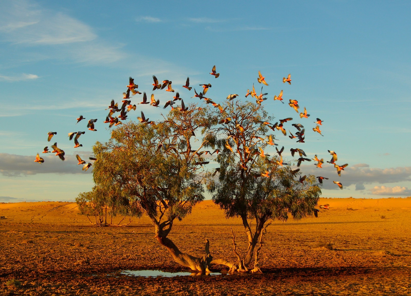 Christian Spencer, Tree of life National Geographic Photo Contest